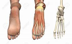 Anatomical Foot Diagram by Foot Anatomy Bottom Human Anatomy Diagram