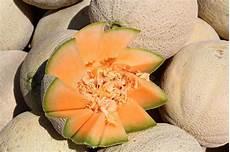 melone kunstvoll schneiden cut cantaloupe stock image image of view supermarket
