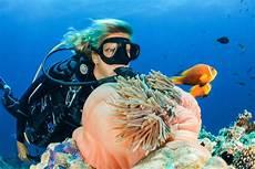 5 reasons to try scuba diving in bali blue season bali