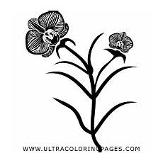 Window Color Malvorlagen Orchideen Orchideen Ausmalbilder Ultra Coloring Pages