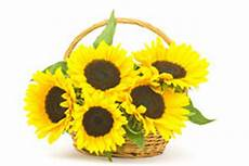 bouquet de tournesol bouquet de tournesol dans un panier photo stock image du