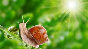 Wallpaper Snail Nature Sunshine Animals 10135