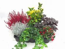 balkonpflanzen set pflanzen versand harro s pflanzenwelt