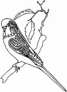 Ausmalbilder Wellensittich Ausdrucken Wellensittich Gif 439 215 600 Ausmalbilder Papagei