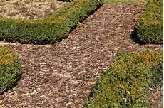 alternative zu rindenmulch und kies pilze auf rindenmulch 187 warum wachsen sie da