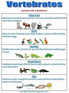 vertebrates chart www loving2learn com teaching science pinterest videos charts and nice