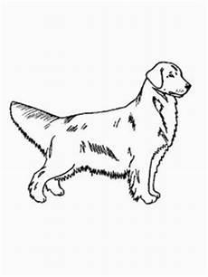 hund golden retriever ausmalbild malvorlage hunde