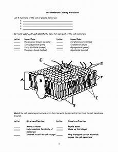 cell membrane activity worksheet cell membrane worksheet google search interactive