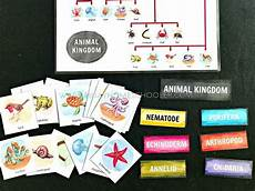 animal kingdom worksheets for kindergarten 14201 animal kingdom 3 part cards and charts continents activities preschool learning activities