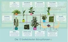 feinstaub grenzwerte büro diese pflanzen eignen sich besonders f 252 r ihr b 252 ro
