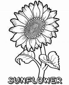 a big sunflower coloring page