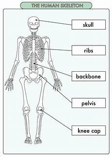 science worksheets human skeleton 12216 fresh lettuce biology resources teaching resources tes
