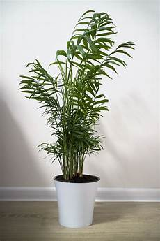 13 houseplants that can survive low light best indoor