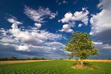 walnussbaum 187 wie viel wachstum pro jahr ist zu erwarten