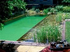 naturelle pour piscine la piscine naturelle