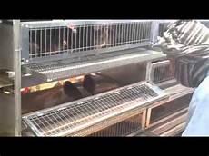 gabbie per quaglie fai da te gabbie per quaglie fattrici e quaglie ingrasso