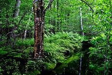 Forest Photo our initiatives forest trends