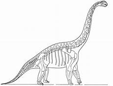 dinosaur skeleton coloring page dinosaurs pictures and facts
