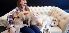 bar a chien lille a lille un caf 233 224 chiens pour rapprocher humains et animaux