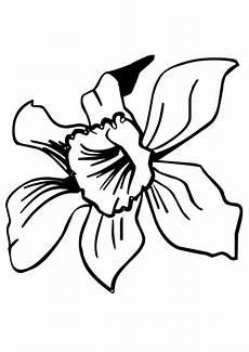 dibujo de la flor nacional de venezuela dibujos para pintar flores orqu 237 dea patrones para pintura sobre vidrio p 225 ginas para