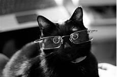 S 252 223 E Katzen Mit Brillen 22 Lustige Bilder F 252 R Echte