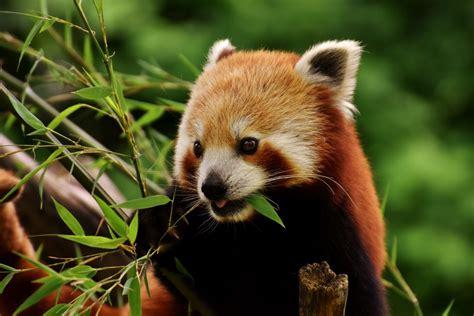 Potastic Panda