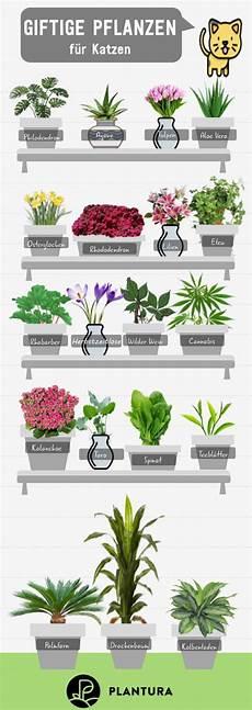 10 giftige zimmerpflanzen f 252 r haustiere fly f 252 r