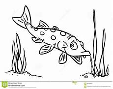 fish pike coloring pages stock illustration image of fish