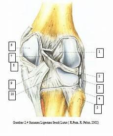Anatomi Fisiologi Knee Joint