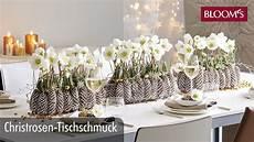 Christrose Im Zimmer - christrosen tischschmuck weihnachtsdeko