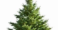 weihnachtsbaum online weihnachtsbaum aus dem online shop ist die ausnahme