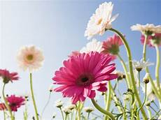 Flowers Desktop Wallpapers