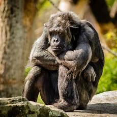 Foto Stok Gratis Tentang Binatang Fauna Hewan
