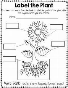parts of plants kindergarten worksheets 13581 actividades para ense 241 ar las plantas en nivel inicial buscar con actividades