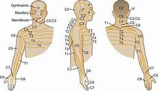 Neck Musculoskeletal Key