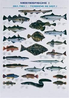 fischarten liste mit bildern pescars fischtafel meeresfische dafv shop