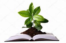 Forex Books Not Plants In The Bible Used As Medicine | green plant growth from book stock photo
