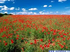 fond d écran attrape rêve scenery wallpaper fond ecran paysage fleurs