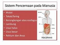 Sistem Pencernaan Makanan Pada Manusia