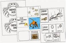 iman s home school crustaceans lapbook
