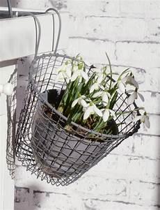 pflanzen günstig perfekt f 252 r den balkon runder blumentopfhalter ib