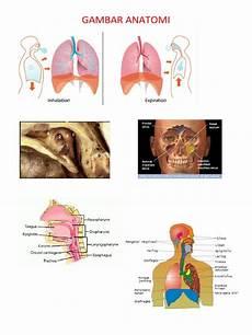 Gambar Anatomi Pernafasan