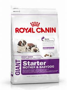 royal canin starter for baby pack size