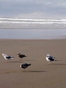 Seagull Apartments Ks by Wa And Seagulls At