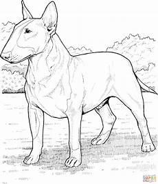 dessin bull coloriage bull terrier coloriages 224 imprimer gratuits