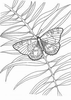 Ausmalbild Schmetterling Umriss Ausmalbild Schmetterling Umriss Zeichnen Und F 228 Rben