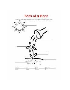 what plants need worksheets grade 13590 worksheets parts of a plant