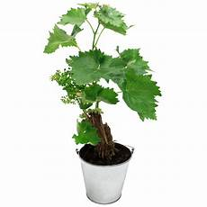 Pied De Vigne Coffret Cadeau Interflora