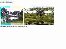 los simbolos naturales del estado guarico simbolos patrios naturales los simbolos patrios naturales