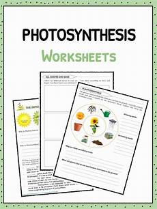 plants and photosynthesis worksheets 13616 photosynthesis facts information worksheets for